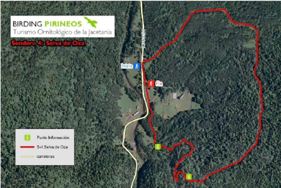 Excursión medioambiental por la Selva de Oza