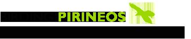Birding Pirineos ornitologia en Jacetania