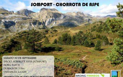 Ruta Ornitológica Somport-Chorrota de Aspe