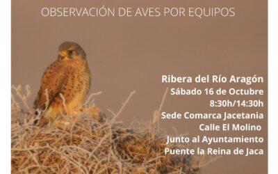 Mini-Maratón Ornitológico en La Jacetania